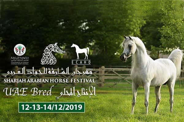 Sharjah Arabian Horse Festival UAE Bred