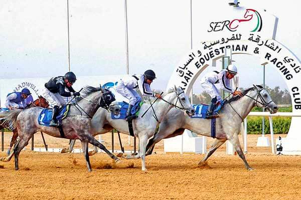 The GCC Race Cup